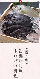 (春〜秋)朝獲れ旬魚トロバコ料理